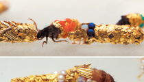 Did You Know Insects Can Design Jewellery?