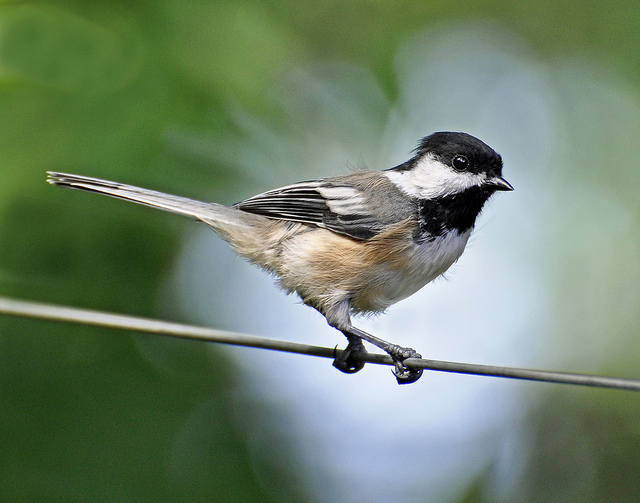 """You HAVE to Watch this Video: """"Birds on a Wire""""."""