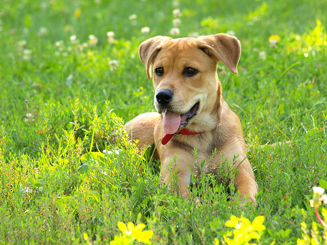 Cute Puppy in Field