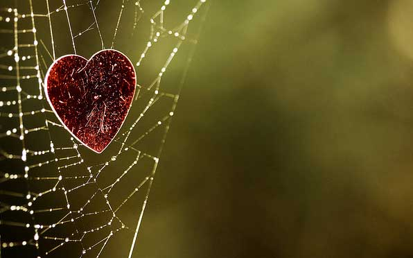 paper heart caught in spider web